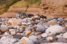 Free Harbour Seal On Pebble Beach Stock Photography - 23024842