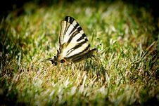 Free Butterfly Royalty Free Stock Photos - 23026568