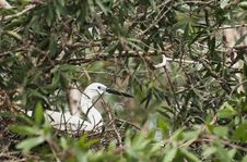 Free Little Egret Stock Image - 23032331