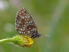 Free Butterfly Stock Image - 23033021