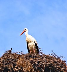 Free Stork In Its Nest Over A Clear Blue Background Stock Image - 23034431