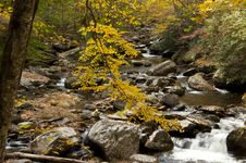 Whte Water Stream In Fall Royalty Free Stock Image