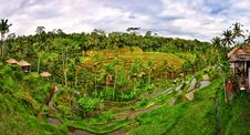 Free Balinese Green Rice Field Terrace Panorama Stock Photography - 23035322