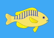 Free Yellow Fish With Blue And Red Stripes Stock Images - 23035334