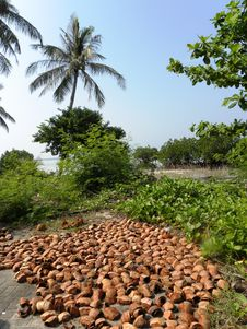 Coconut Shells And Trees Stock Photography