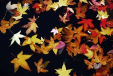 Free Autumn Leaves. Stock Photography - 23044952