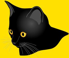 Free Black Cat With Golden Eyes Stock Photos - 23045993