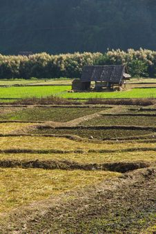 Paddy Field In Countryside Royalty Free Stock Photo