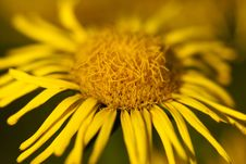 Free Yellow Flower Stock Images - 23054754