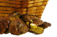 Free Freshly Collected Wild Mushrooms And Basket Royalty Free Stock Photo - 23055485