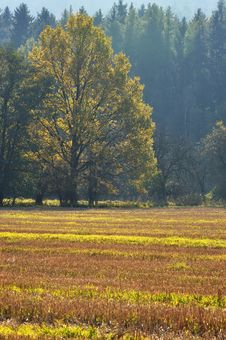 Free Autumn Colors Royalty Free Stock Image - 23055626