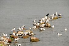 Free Seagulls On Rocks In The Water Stock Photos - 23055633