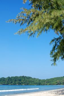 Free Pine Trees Near The Beach Stock Image - 23058181