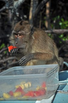 Free Eating Monkey, Thailand Stock Photos - 23065143