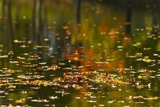 Free Autumn Foliage Reflection In Lake Stock Photos - 23066343