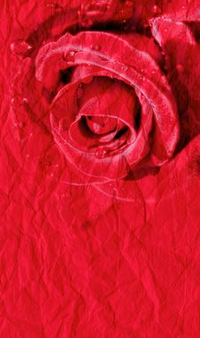 Free Red Rose On Paper Background Royalty Free Stock Image - 23068266