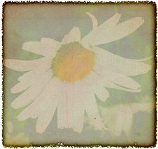 Free Vintage Chamomile Flowers Background Stock Image - 23068301