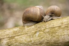 Free Snails Royalty Free Stock Photo - 23069735