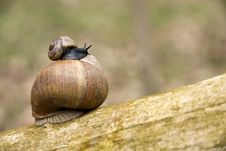 Free Two Snails Royalty Free Stock Images - 23069779