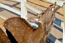 Free A Deer. Royalty Free Stock Photo - 23075425