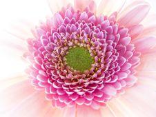 Free Daisy Close-up Interior Royalty Free Stock Photo - 23075705