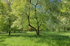 Free Spring Orchard Stock Image - 23075921