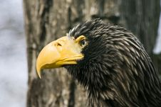 Portrait Of An Eagle Stock Photos