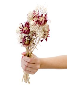 Free Bouquet Stock Images - 23081294