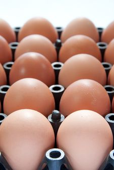 Close Up Of Eggs In Plastic Container Royalty Free Stock Photos