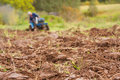 Free Tractor Ploughing On The Field Royalty Free Stock Images - 23099619
