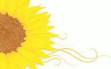 Vector Sunflower. Royalty Free Stock Photography