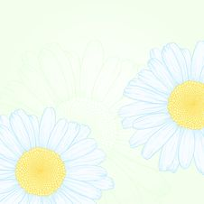 Free Vector Daisies. Stock Images - 23097154