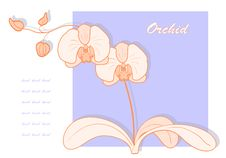Free Vector Orchid. Royalty Free Stock Photography - 23097167