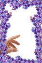 Free Beautifull Orchids Frame Stock Photos - 2315103