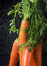 Free The Carrots & Rain Royalty Free Stock Photo - 2316875