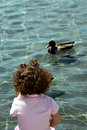 Free Watching The Duck Stock Photo - 2319960