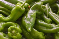 Free Green Italian Pepper Stock Images - 2310004