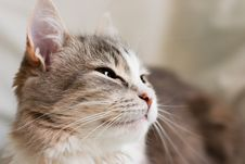 Free The Kitten Royalty Free Stock Photos - 2310148