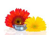 Free Zen Treatment Stock Photo - 2311060