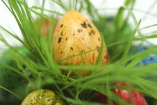 Free Easter Eggs Hiding In Grass Stock Photo - 2311220