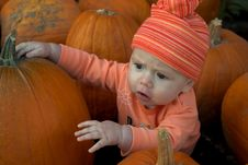 Free Pumpkin Patch Royalty Free Stock Photos - 2311628