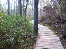 Free Venus Flytrap Trail Stock Image - 2314181