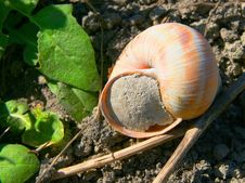 Free Snail Closed In His Cottage Stock Photos - 2314393