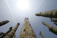 Free Soaring Cactus Stock Photos - 2314623