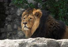 Free Leo Royalty Free Stock Photos - 2314948
