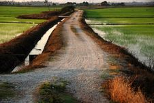 Free Road, Paddy Field, Morning Stock Image - 2315081