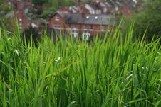 Free Sunny Green Grass Royalty Free Stock Images - 2316359
