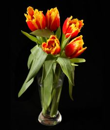 Free Red Tulips Royalty Free Stock Images - 2318089