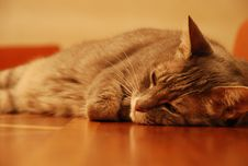 Free Thinking Cat Stock Photo - 2318240