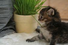 Free Small Kitten Stock Photo - 2318310